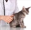Ветеринарные клиники в Досчатом
